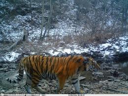 http://china.dwnews.com/photo/2014-11-21/59619824.html