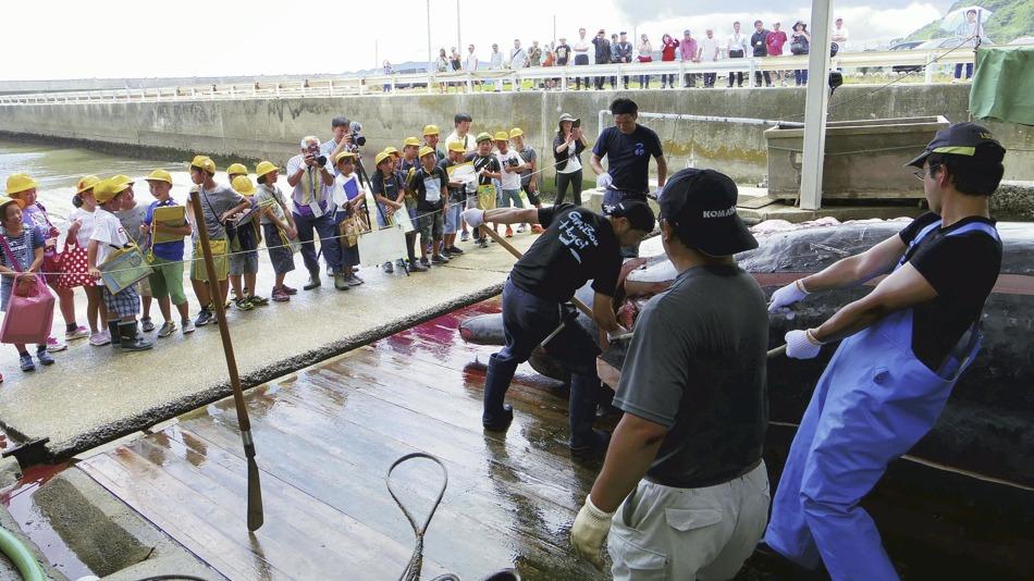 日本学校组织小学生现场观摩鲸鱼解剖 画面残忍[图集]